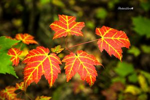 Fall color pop by gigi50