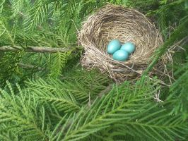Robin's Nest by RosyDawn527