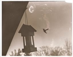 Humming bird by IndifferentSociety