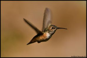 Hummingbird 2011 by AirshowDave