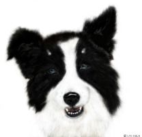 Border Collie 10 by LKE-Kola