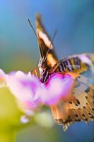 iColorfly by mohdfikree