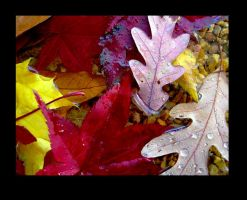 wet autumn leaves 3 by heatherspettals