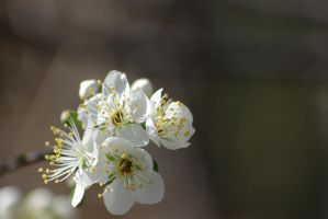 Flowers by CAmpoo691
