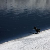 Dog At The Lake IR by LDFranklin