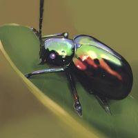 Beetle Speed Painting by iononemillion