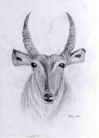 Waterbuck by H3llzAng3l