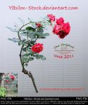 Red Roses Bush by YBsilon-Stock by YBsilon-Stock