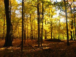 Golden Canopy by VeronicaNyx