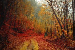 Picture of fall II by valiunic