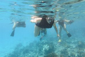 Turtle Cove, Snorkelers In Search by Miss-Tbones