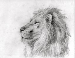 Lion by kitkeys
