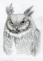 Owl by InstaartOfficial