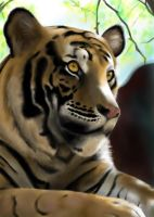Tiger :D by accasperberry3