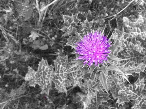 Thistle(Black and White) by ethan-gomez13