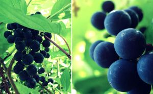 Grapes by assica
