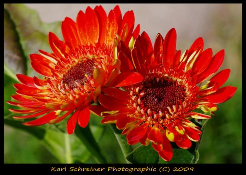 Red 2 by KSPhotographic