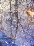 Trees Captured in a Puddle by NatyaMoon