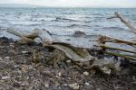 Wild beach and fragment 2 by A1Z2E3R