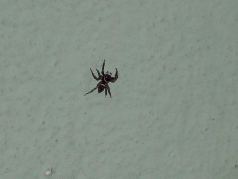 Spider in the wall by parishad
