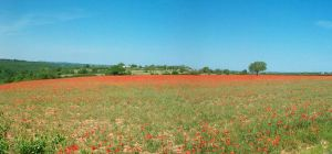Field Of Poppies by Mariestel