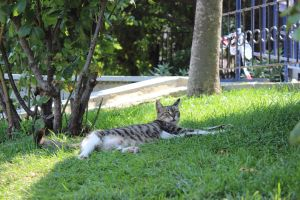 Istanbul 2012 - Beautiful cat by Demonescuro