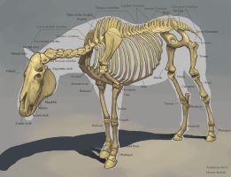 Horse Skeleton by awesomeplex