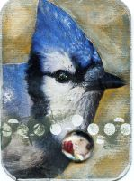 Bird ATC -- Blue Jay by LauraTringaliHolmes