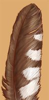 Feather Tattoo by cambium
