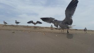 Seagulls II by discountabortions