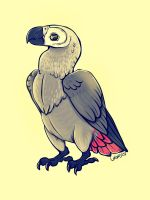 One Grey Parrot by black-brd