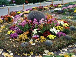 Flower arrangement by Kitty-Amelie