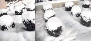 cute snowy bushes by entemin