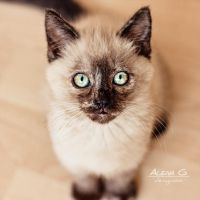 Little Kitty by Alena-G-Photography