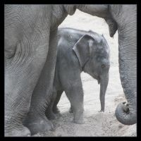 Little Elephant4 by Globaludodesign