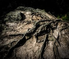 Rough roots by arjantje