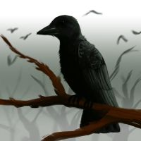 speedpaint crow by Mad-March