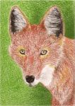 Day 27: Ethiopian Wolf ACEO by whitetippedwaves