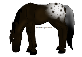Appaloosa Mare by TayMay135