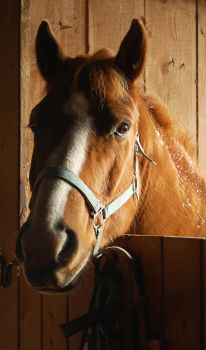 Home Is Where I Make It by equineinnocence