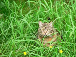 My cat in the grass by Nerd-Rage