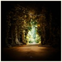 in to the light by jfarchaul