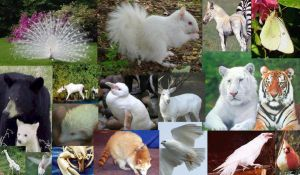 Albino Collage by Wolf-Sis-the-Small