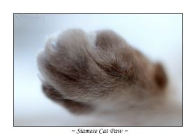 Siamese Paw by cat-lovers