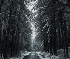 Path of Winter by AleksandarDark