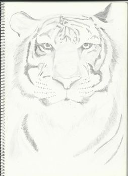 Tiger by iNf3ctedRa1N