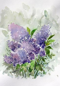 watercolor- Lilac by sunaysenturk