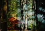 Home in the Woods by lokispace