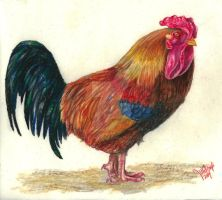 rooster by winstonscreator