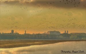 The Wild-goose. HDR-picture. by magyarilaszlo